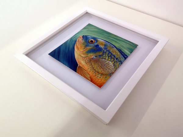 Framed painting of a cichlid