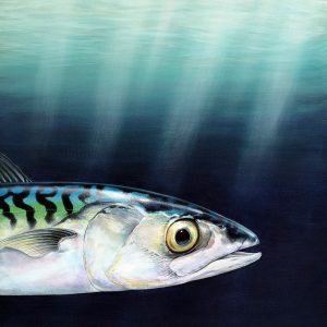Original mackerel painting