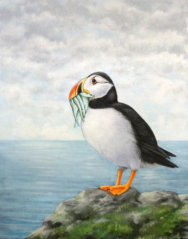 Atlantic Puffin painting - acrylic bird art original