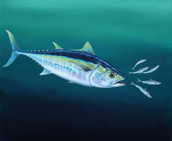 Tuna fish painting in acrylic