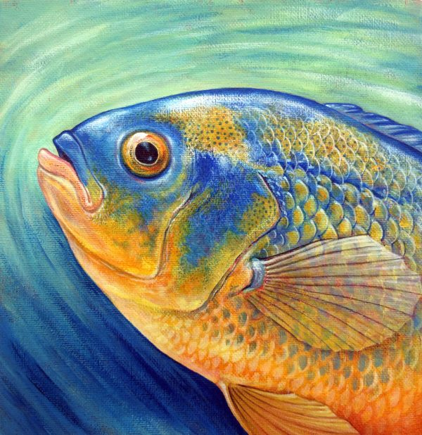 Cichlid Fish painting for sale