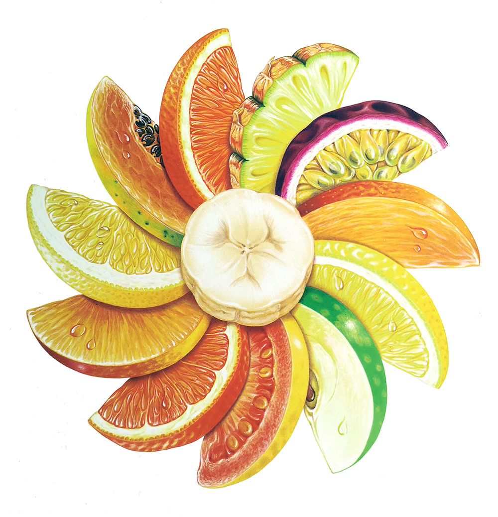 Illustration showing a circle of fruit slices