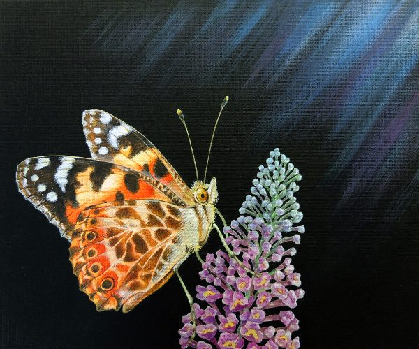 Painted Lady butterfly painting for sale