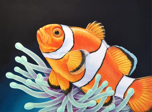 Clownfish painting for sale