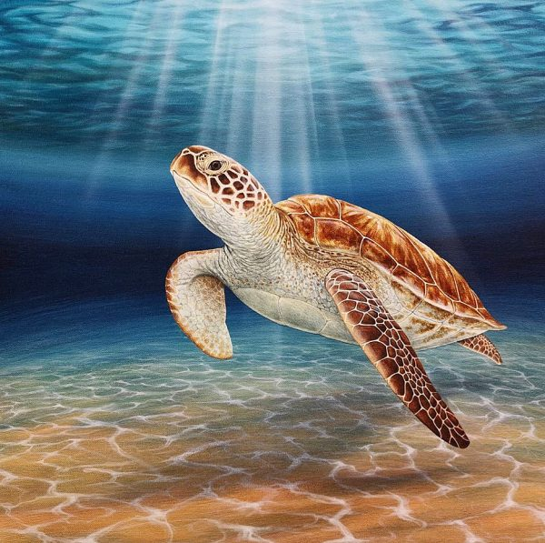 Original painting of a Green Sea Turtle