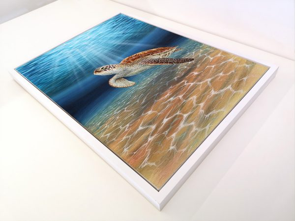 Framed painting of a Green Sea Turtle