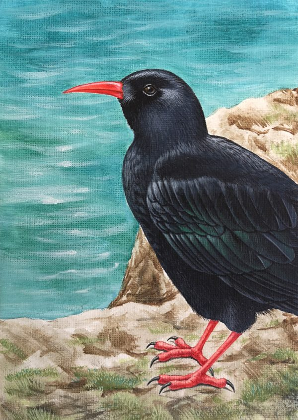 Chough painting - acrylic bird art original