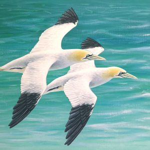 Gannet painting - acrylic bird art original