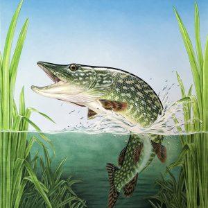 Northern Pike painting - acrylic fish art original