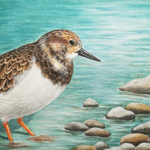 Turnstone painting - acrylic bird art original