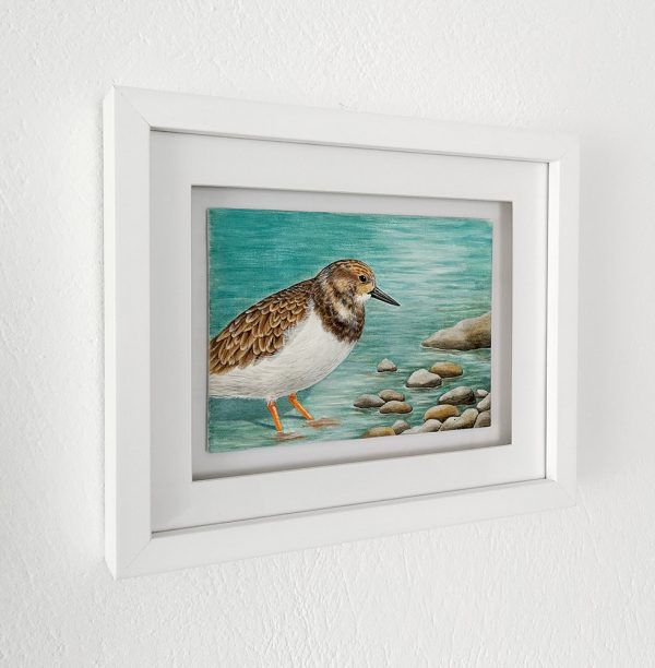 Turnstone painting in a white picture frame