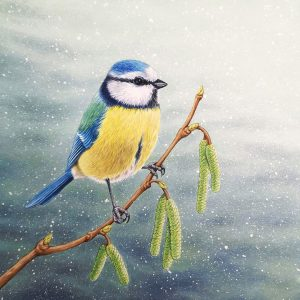 Original painting of a Blue Tit in the show