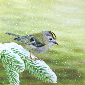 Goldcrest painting