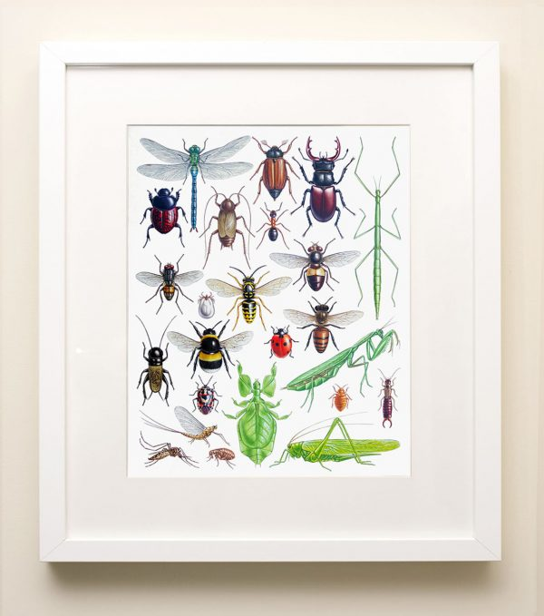 Framed painting of Insects