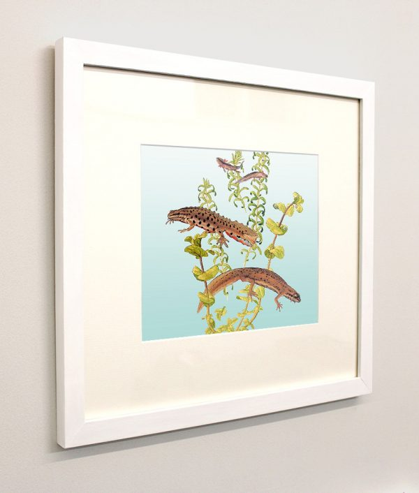 Framed painting of Newts