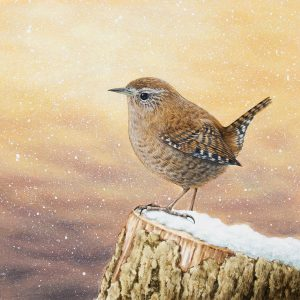 Painting of a Wren