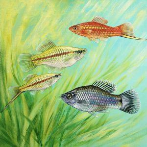 Original painting of Swordtail fish