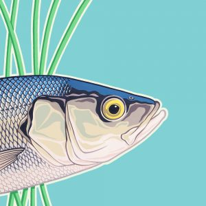 Original painting of a Sea Bass