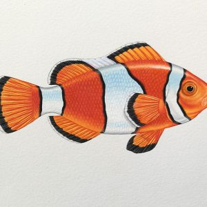 Clownfish painting in watercolour