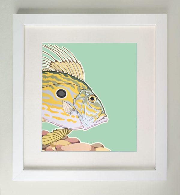 Framed painting of a John Dory fish